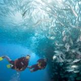 Scuba Diving in a school of fish in Malaysia